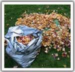 Yard Waste Fact Sheet